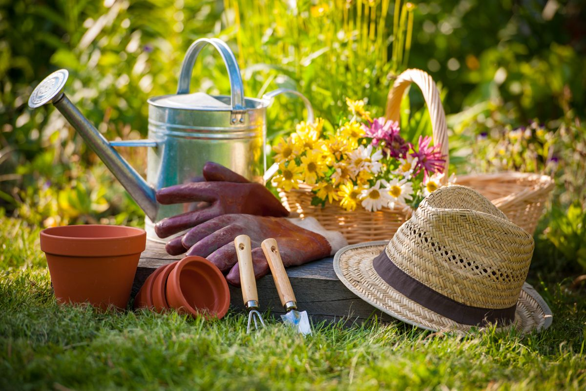 Want To Become A Pro At Gardening? Read On